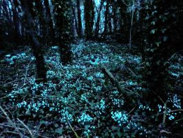 Snowdrops in the dark by MakinMagic