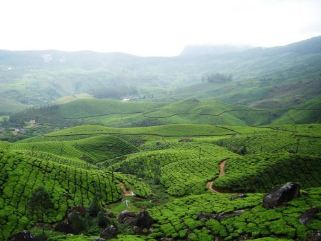 Tea Plantation Hills 1 by Alienesse-Stock