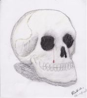 Skull Drawing by Drummyralf