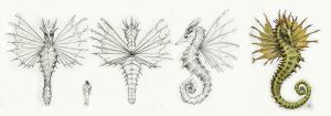 Character Design - Seahorse Dragon by FrancescaBaerald