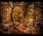 The forgotten path by BenoitJWild