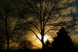 Wintry tree sunset by MNgreen