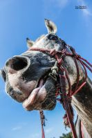 Horsing Around by IJPhotography