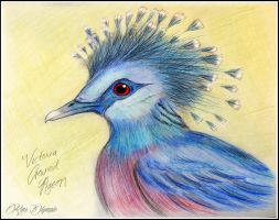 Victoria Crowned Pigeon by RMS-OLYMPIC