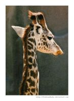 Giraffe Portrait by fishtankbabe