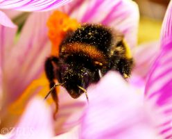 Busy Bee. by ZEUS1001