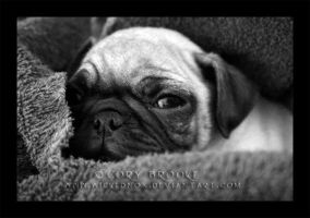 Pug in a Rug by WickedNox
