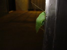 leaf bug 2 by LizartLizard