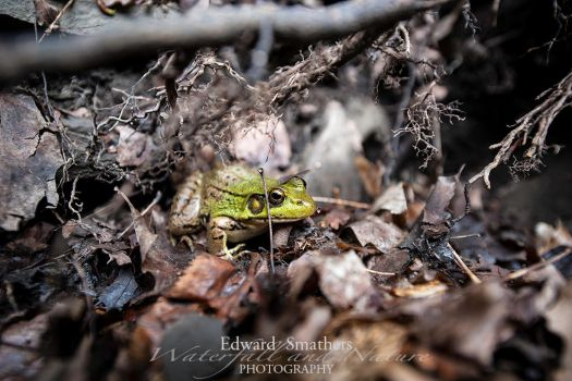 First Frog of the Season by esphotoz