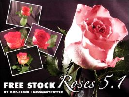 FREE STOCK, Rose Pack 1 by mmp-stock