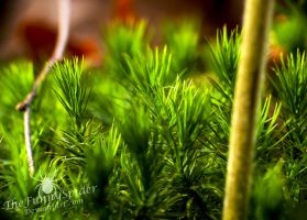 Moss - Close up Photography by TheFunnySpider