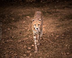 On the hunt by TlCphotography730