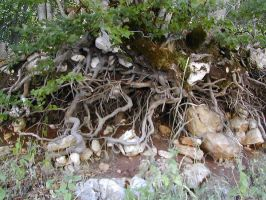 Root 4 by Ivette-Stock
