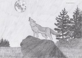 Wolf by Guy-Inkognito