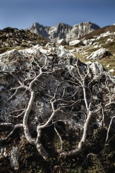 Roots Of The Mountain by atreyu64