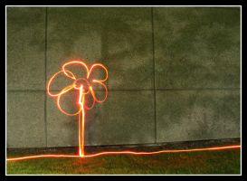 light painting flower by quasiohnemodo