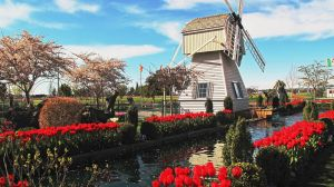 Tulip Town by KRHPhotography