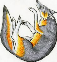 Falling Gray Fox by Stormslegacy