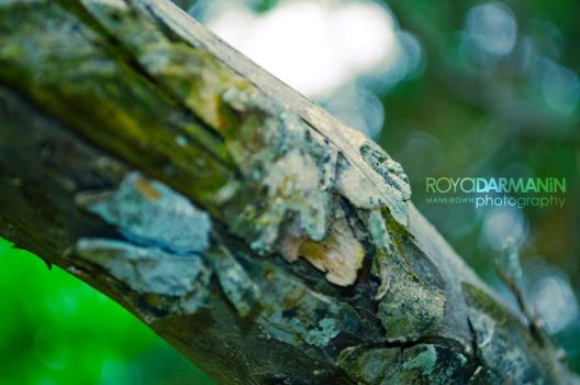 Tree Trunk by MaNkIbOwN