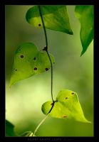 Heart Shape Leafs by Gil-Levy