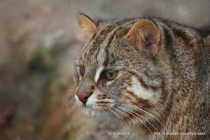 Amur cat by KIARAsART