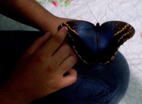Butterfly by x-Lucyne-x