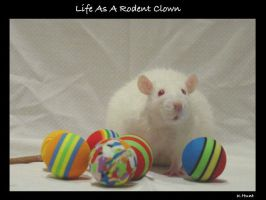 Life as a Rodent Clown by rosesburn
