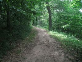 Sony Contest - Forest Path by darkmousy2002