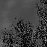 winter crows by adorell