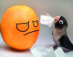 Mr. Orange, would u like to play with me? by emmil