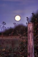 Violet moon by Anupthra