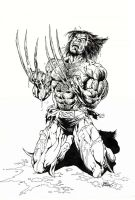 Wolverine Black and White by Reybronx