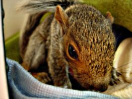 Squirrels love cameras by Aniar