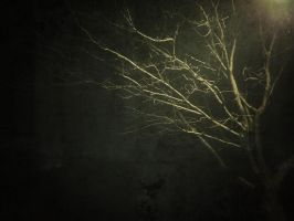 The Day of Night by trickytreater