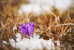 Spring it`s here by adypetrisor