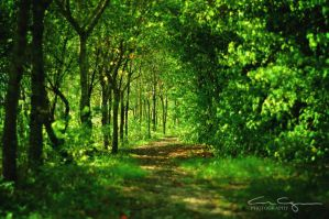 The path by FrenchieSmalls