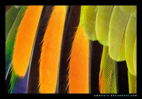 Feather Rainbow by amaliabastos