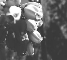 Spring Can Be Black And White by ISeeMyWorldInACamera