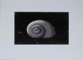 Shell Scratchboard by Geak-of-Nature