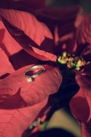 the ring. Holland wedding by christopherBOBEK