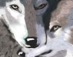 Wolves couple v882 by lv888