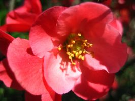 Pink Flower 1 by Holly6669666