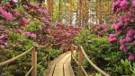 Rhododendron Park by Pajunen