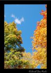 Perfect Autumn Day 2 by ChatNoir13