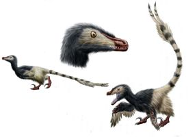 Velociraptor studies by Durbed