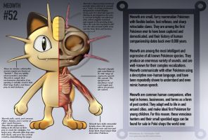 Meowth Anatomy- Pokedex Entry