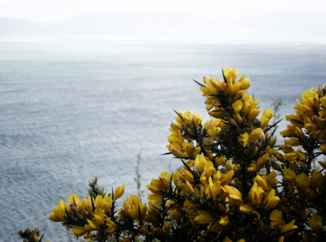 shores of ireland. by miss-momentum