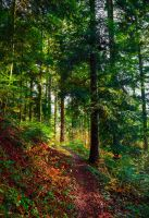 Forest Trail II by Aenea-Jones