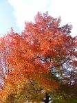 Running out of Autumn trees by jande