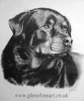 Rottie by Dhekalia